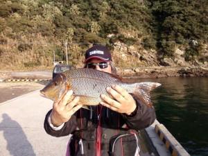 3大隅支部他魚の部 タバメ(ハマフエフキ) 47cm